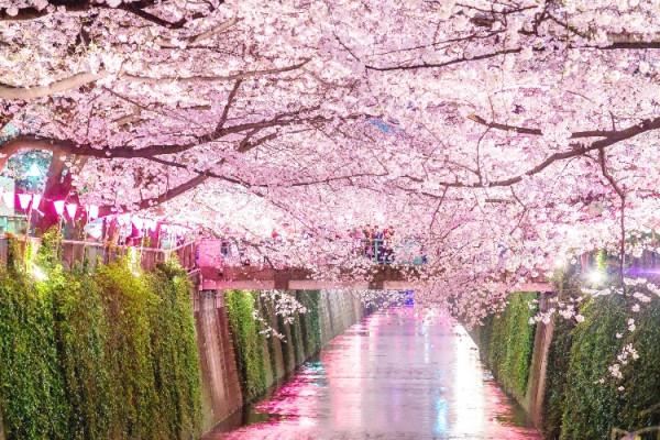 일본 여행 즐기는 인도네시아인 증가세 Gt 경제∙비즈니스 교민과 함께하는 신문